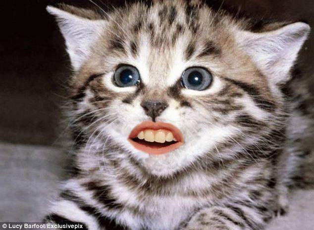 foto-divertida-gato-maquillado