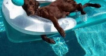 foto-divertida-perro-colchoneta