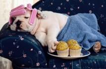 foto-divertida-perro-sofa