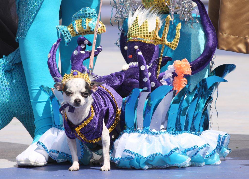 carnaval canino-2011-cloe