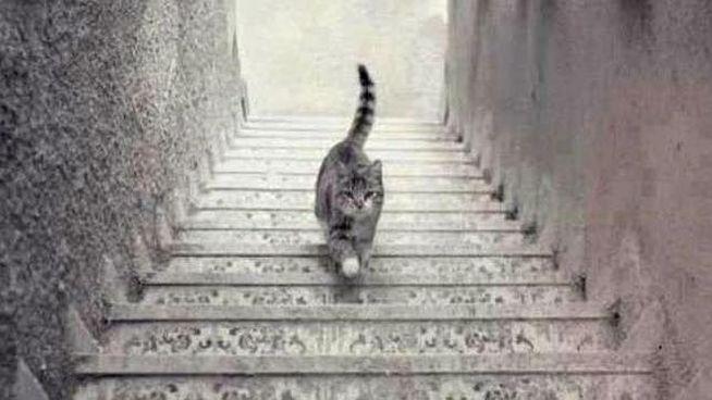 Ilusión óptica del gato