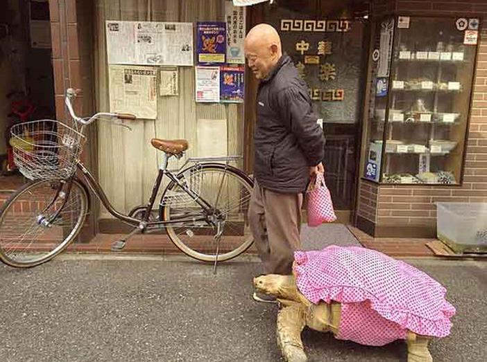 tortuga-gigante-mascota-paseando