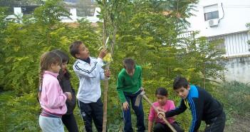 ceip-huerto-colegio-escuela