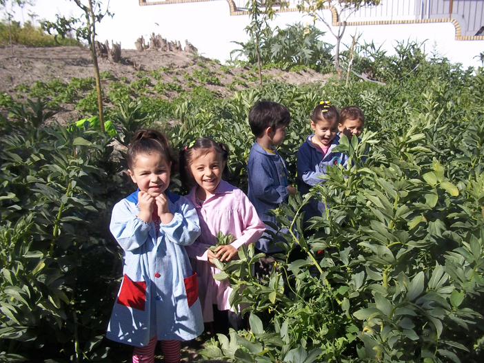 huerto-escolar-ceip-muñoz-garnica-jaen (4)