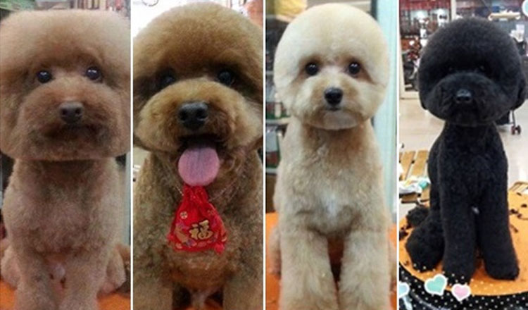 noticia-perros-corte-pelo-taiwan3