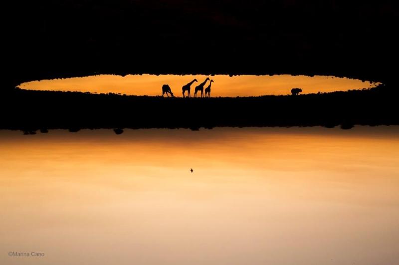 marina-cano-wildlife-jirafa