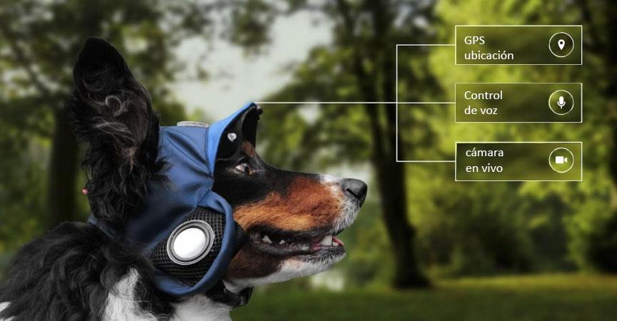 Pasea-a-tu-perro-desde-casa-con-este-nuevo-dispositivo-portada
