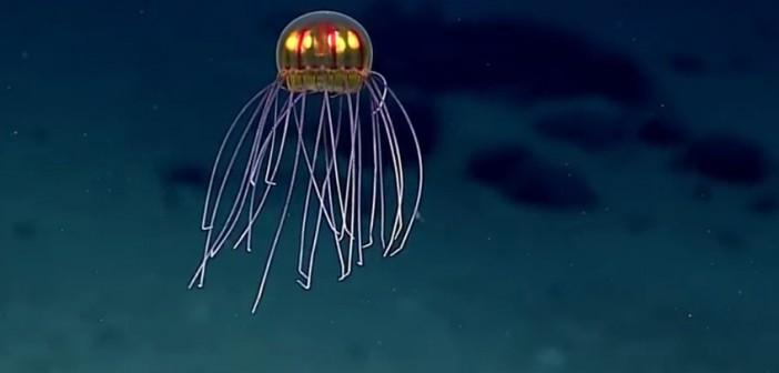 ¿Medusa alienígena?