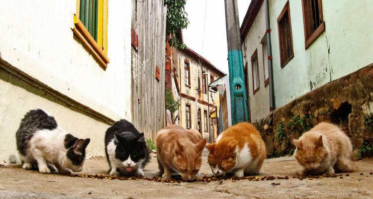 El gancho. Alimentar-gatos-callejeros-Malaga