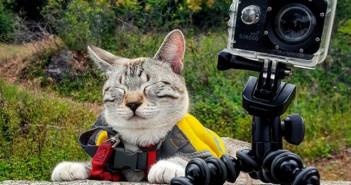 Campamento-para-gatos-12