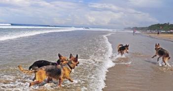 El Gancho. perros-en-la-playa-barcelona