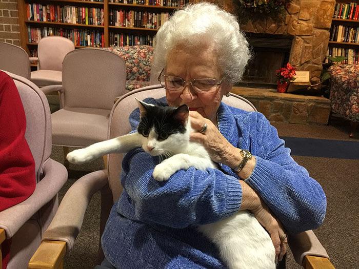 El gancho. gatos adultos para personas mayores