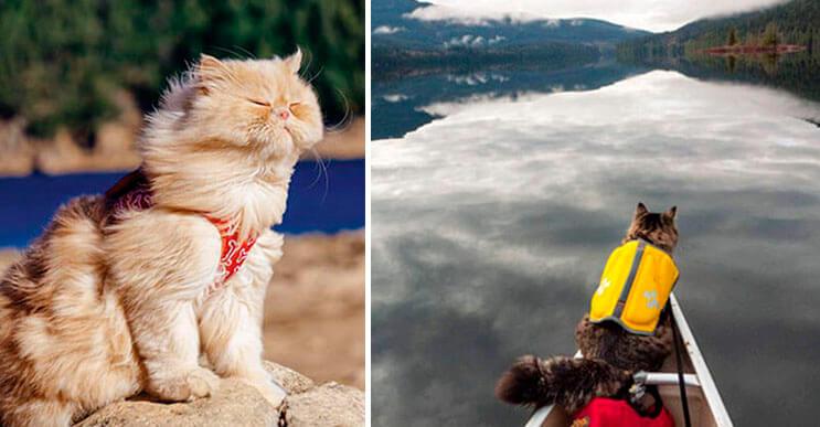 campamento-para-gatos-portada