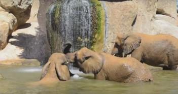 elefantes-bioparc-valencia
