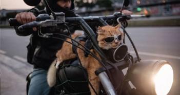 gato-chiquinho