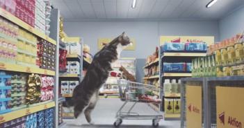 gatos-supermercado-aleman