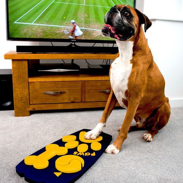 mando-distancia-perro