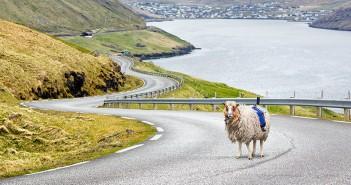 oveja-camara-sheep-street-view