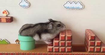 El hamster que imita a Mario Bros