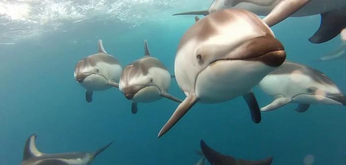 ¡Nadando con delfines!