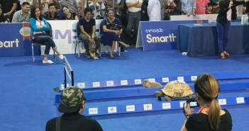 La tortuga que gana a la liebre