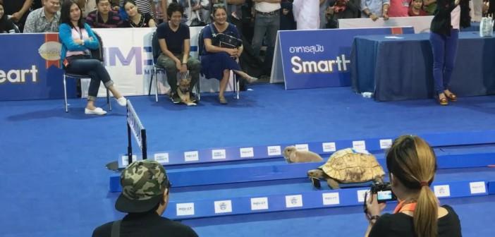 La tortuga que ganó a la liebre!