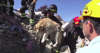 romeo-perro-milagro-terremoto-italia