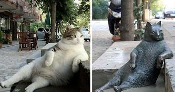 tombili-estatua-gato