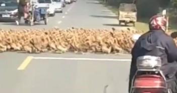 20000 patos china