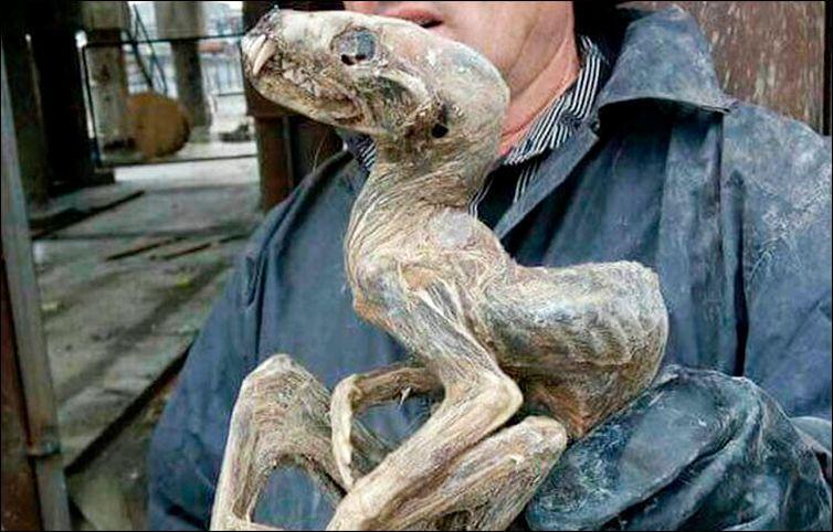 encontrada extraña criatura en-siberia