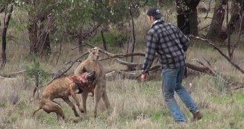 Salva a su perro del canguro
