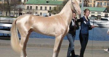 El caballo mas bonito del mundo