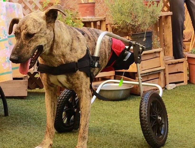 El refugio para animales discapacitados