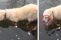 Vaya pesca-Perro-Pescando