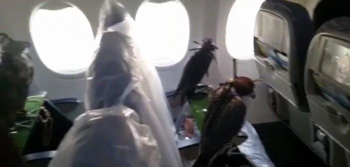 ¡80 halcones viajan en primera clase!