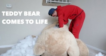 Cámara oculta-el oso que se mueve