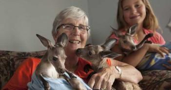La mamá de los canguros australianos2