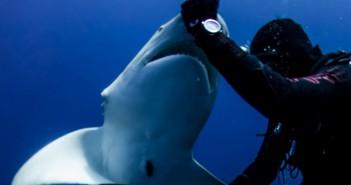Le quita un anzuelo al tiburon