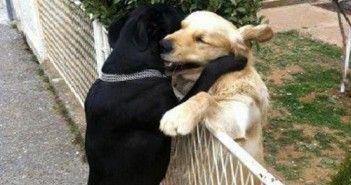 Quién dice que los animales no se ayudan a otros