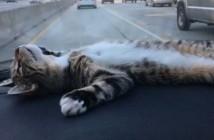el-gato-que-no-se-inmuta
