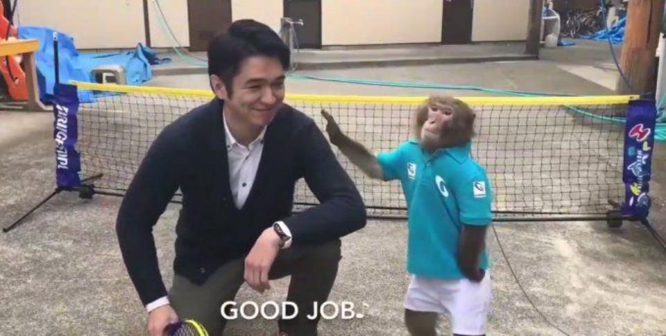 El mono que juega al tenis1