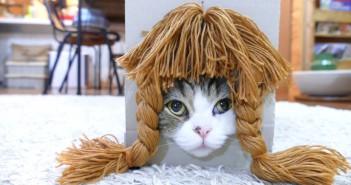 el-gato-mas-visto-de-youtube