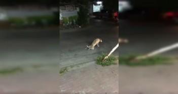el-perro-que-se-hace-el-invalido