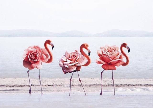 foto-divertida-flamencos-flores