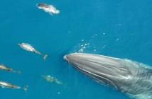 delfines-y-ballena-nadando-juntos-costa-del-garraf
