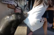 la-nina-que-se-salva-del-leon-marino