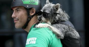 ruffit-La mochila para llevar a tu perro