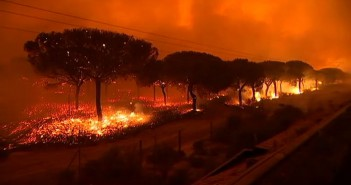Incendio-Donana-lince-homer