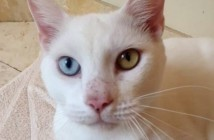 cotton-el-gato-que-creian-que-era-ciego