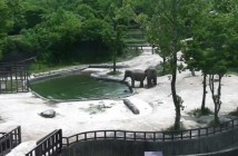 salvan-al-bebe-elefante-al-caer-al-agua